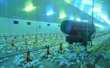 Chicken Meat Building